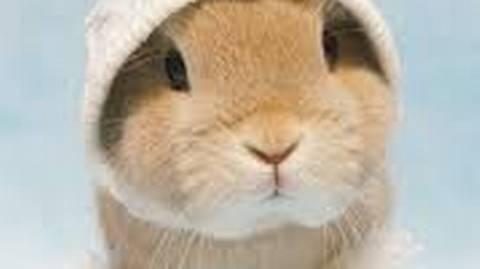 Hi ! I'm Newman and I'm fast! ⛹️ -